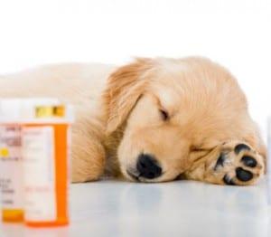 ciclosporina capsule cane farmacia ternelli