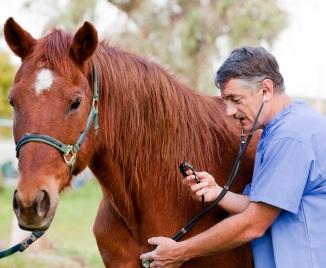 biioduro di mercurio pomata galenica veterinaria in Farmacia
