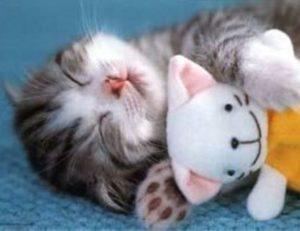 Il Farmacista prepara tinidazolo per gatti e cura la loro infezione :)