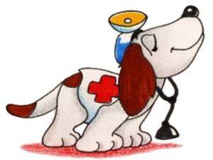 Budesonide capsule uso veterinario o umano grazie al Farmacista
