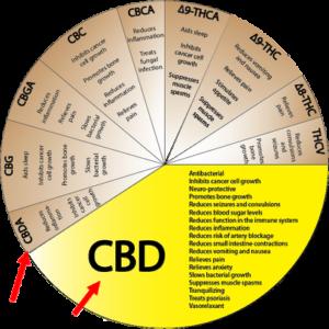 Si capisce l'importanza di avere un olio di CBD e non un olio di CBDa?