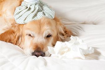 Lomustina cane e cancro: farmaco galenico in Farmacia