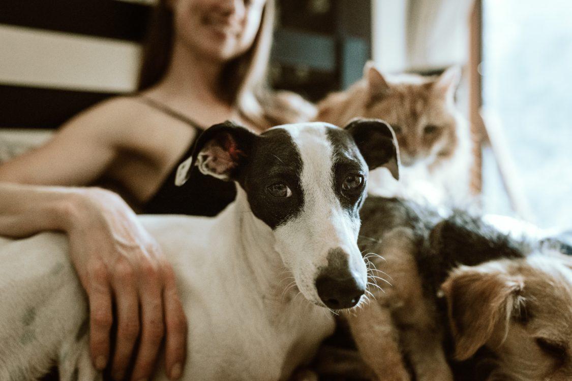 Lomustina per cane e gatto o ad uso umano