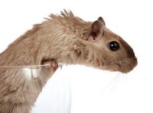 Per uso veterinario, il farmacista prepara ANCHE la piperazina adipato farmaco galenico