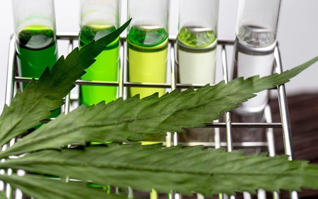 Titolazione olio di cannabis: valutarne la qualità