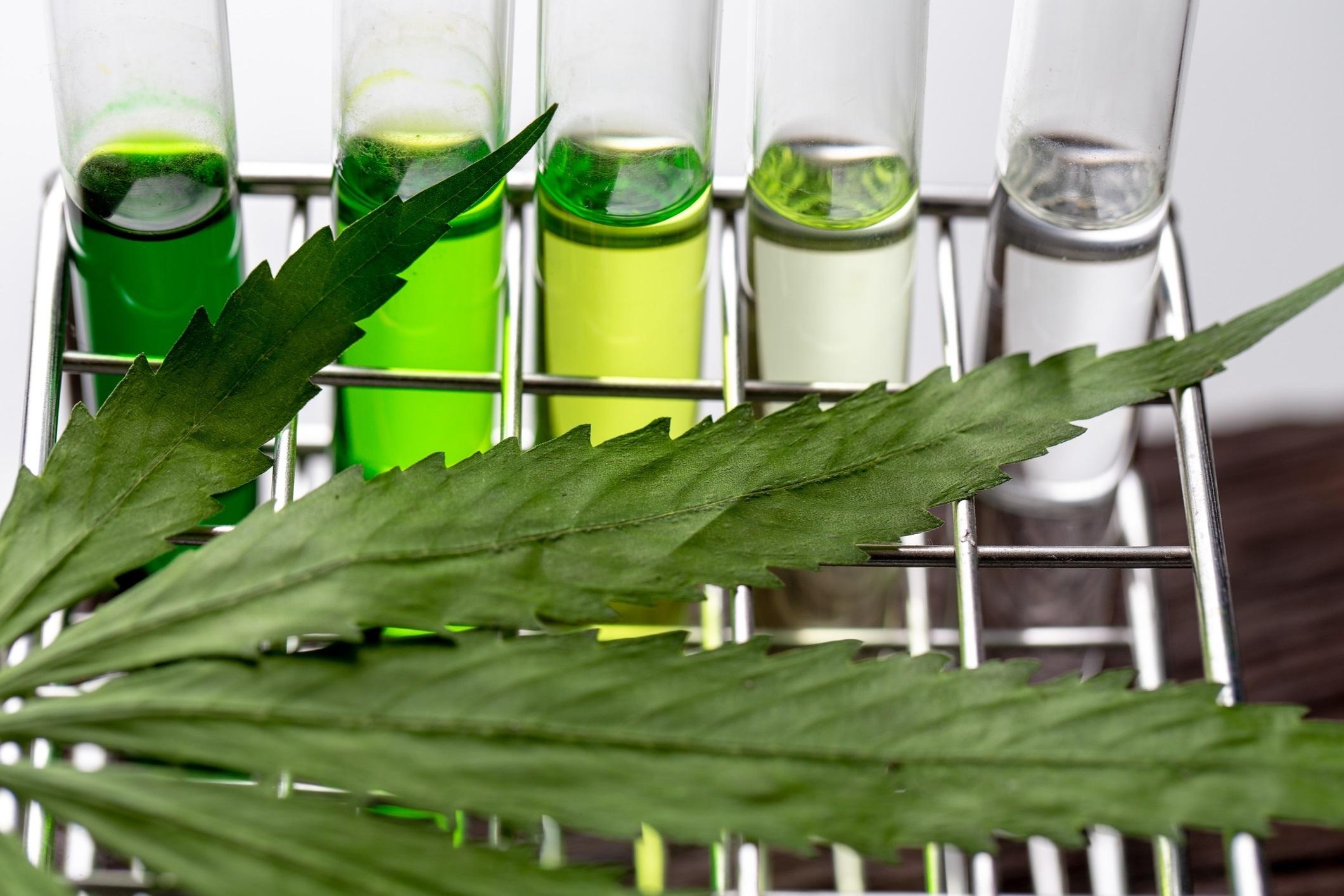 Titolazione olio di cannabis: calcolo dosaggio THC e CBD