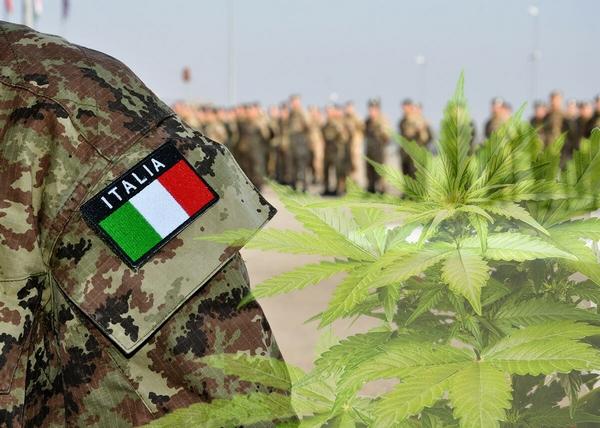 Cannabis medica FM2 FM1: guida completa