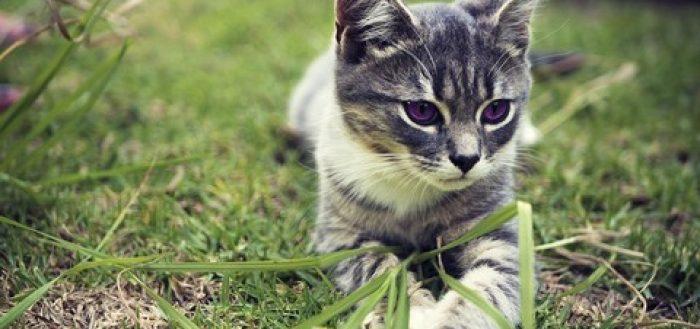 metimazolo nel gatto gel plo transdermico tapazole farmacia