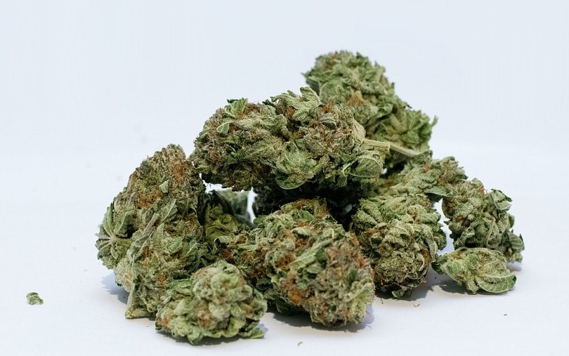 carenza cannabis terapeutica bediol farmacia