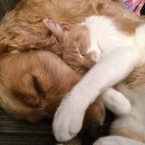micofenolato uso veterinario cane gatto farmaco galenico farmacia.jpg