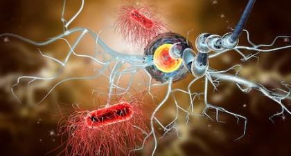 Clemastina sclerosi multipla: farmaco galenico reperibile