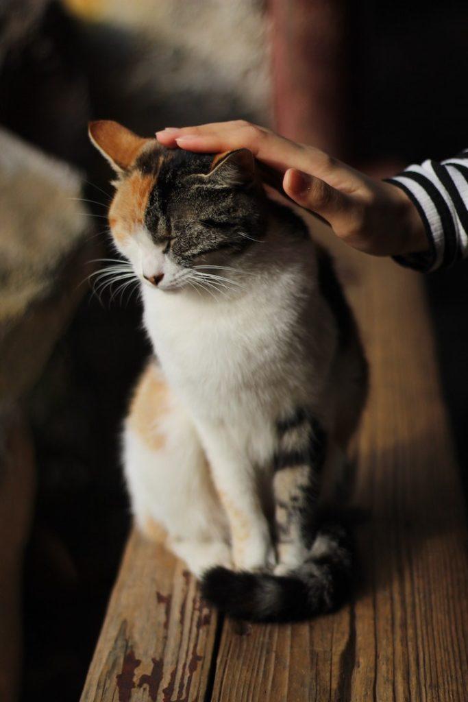 cannabis CBD uso veterinario ricetta gatto