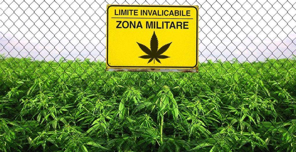 cannabis FM2 FM1 farmacia ternelli