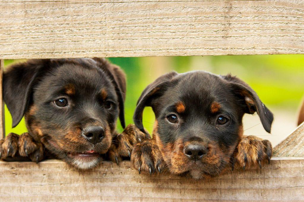 ranitidina ad uso veterinario