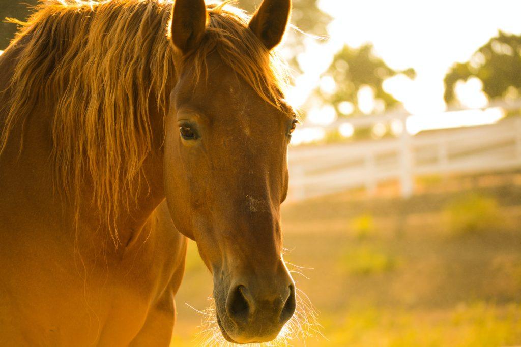 farmac veterinario per cavalli