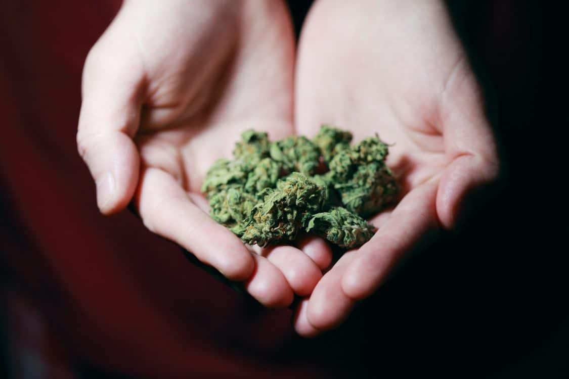 Spedizione cannabis terapeutica a domicilio: storia di un ricorso
